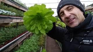 "Салаты зимой на ферме ""Карпусь"" с Александром Балюрой"