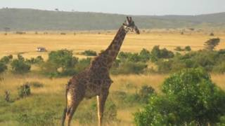 Африканская саванна. African savanna.