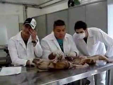 Estudo anatomia humana