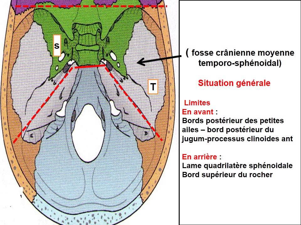 ANATOMIE MS Schémas de la base du crâne - YouTube