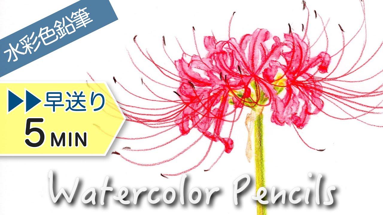 水彩色鉛筆 紫色の薔薇 バラ を描く Purple Rose Drawing With Watercolor Pencils Youtube