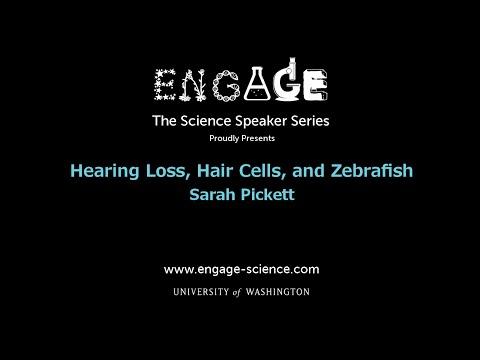 Hearing Loss, Hair Cells, And Zebrafish By Sarah Pickett