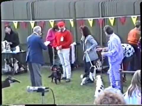 1992 Adelaide Royal Show - Cavalier King Charles Spaniels (judge: Andrew Brace)