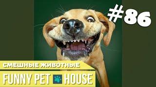 СМЕШНЫЕ ЖИВОТНЫЕ И ПИТОМЦЫ #86 АВГУСТ 2019   Funny Pet House