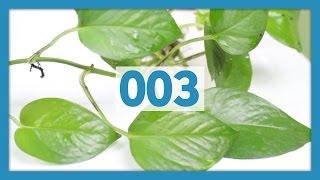 Best Easy Plants for Reptiles & Amphibians