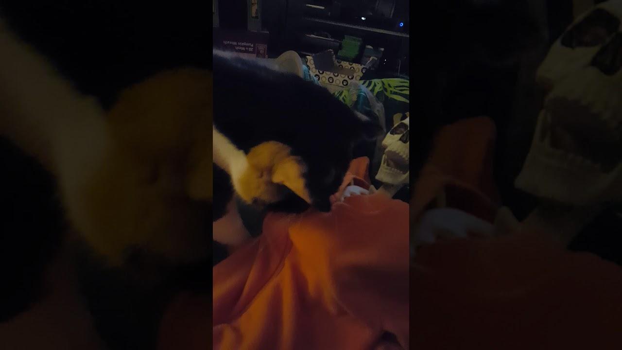 Cat vs skeleton