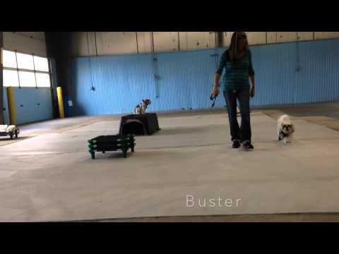 Einstein Dog Training Fenton Mi
