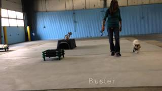 Off Leash Heeling Board And Train Shih Tzus Fenton Mi