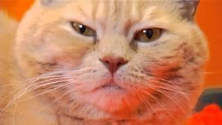 "Winnipeg Humane Society Pet Profile - ""tofu"""