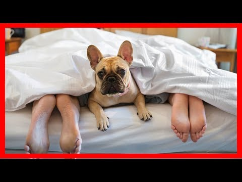 Breaking News   People sleep more soundly with their dogs in the bedroom ... with one exception