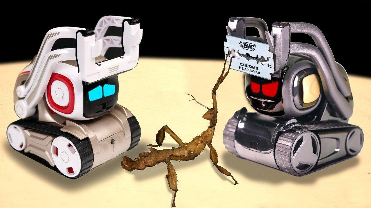 WHAT IF THE COZMO AND ANKI VECTOR ROBOT SEE EACH OTHER TWO ARTIFICIAL  INTELLIGENCE VS WALKING STICK