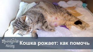Как помочь кошке во время родов?