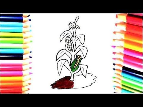 Dibuja Y Colorea Maíz Dibujos Para Niños Learn Colors