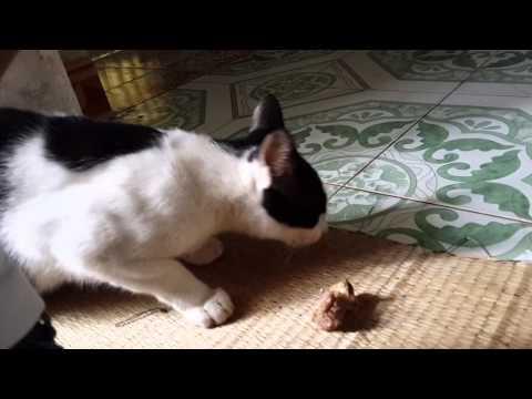 Mèo biết nói I LOVE YOU