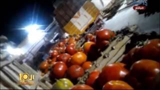 شاهد.. مصنع صلصة يفرم الطماطم بالعفن