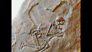 10 Fósiles Encontrados Más Caros en la Historia