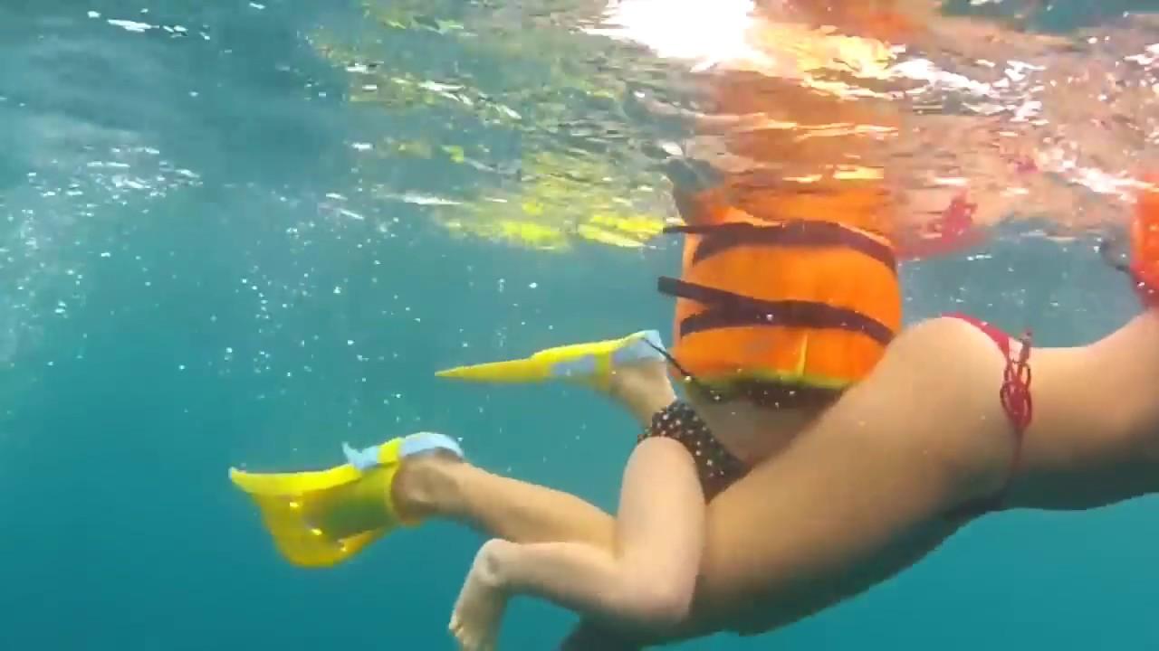 Nuotare con i delfini youtube