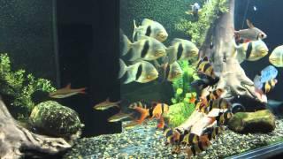 Huge Aquarium Update - 770 Gallon