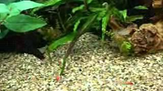 165 litre aqua one 850 tropical fish tank