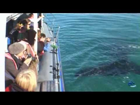 Whale Watching with Dyer Island Cruises