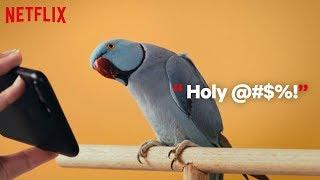 Bird-Box | Vögel Abgeben Bird-Box | Netflix