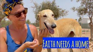 Faith has faith she will find a home!