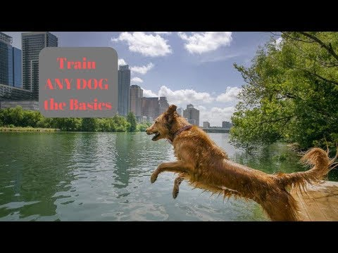 how-to-train-any-dog-the-basics
