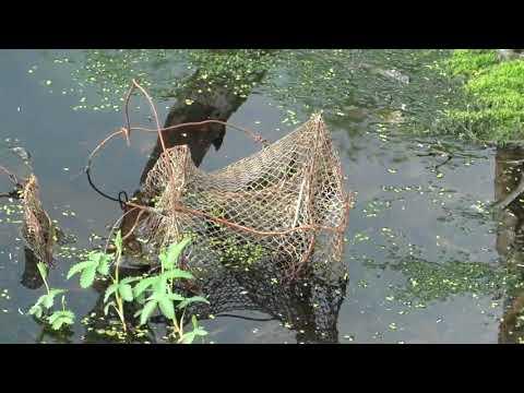 один из старых способов ловли рыбы  Кужа