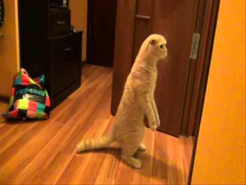 Кот в шоке! (My cat shocked!)