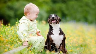 Best babies laughing hysterically at dogs | Funny Animal vs Baby Compilation