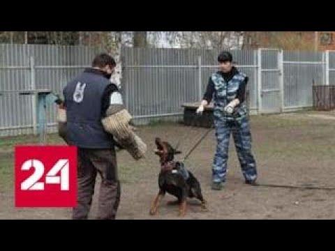 На семью с ребенком в Серпухове напали два добермана - Россия 24