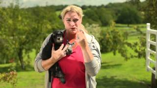 Puppy Dog Training Dvd Overview - The Complete Guide To Puppy Training And Home Care - With Ewa