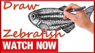 How To Draw A Zebrafish - Learn To Draw - Art Space