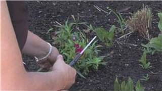 Flower Gardening : How to Prune Carnations