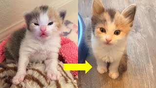 Rescue Tiny Bottle Kitten Transform to Such Sweet Cat