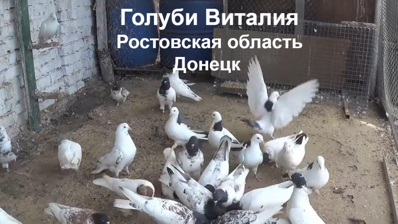 проститутка города донецк ростовской области