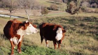 Sandrock Ranch Promotional Video