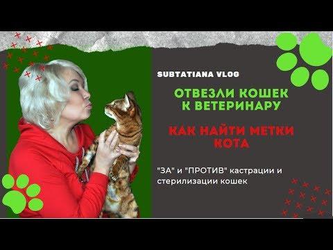 ❤️ДАШКА сделала ЭТО!❤️Отвезли кошаков к ветеринару.Как найти метки кота.Теперь все счастливы.❤️