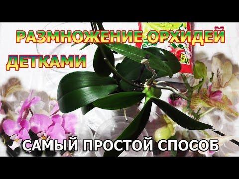 Орхидеи. -