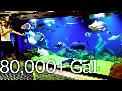 Massive 80,000+ Gallon Fishroom Tour, Showing All The Monster Fish  - We Are Ohio Fish Rescue