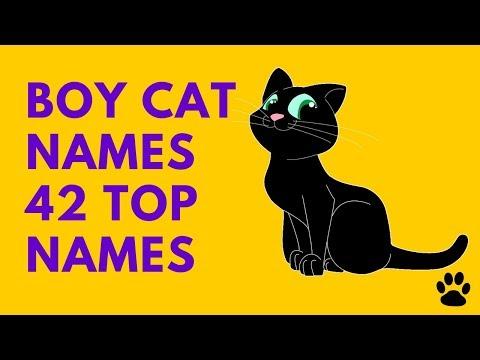 Boy Cat Names - 42 Top Names !!! [Best List] | Names