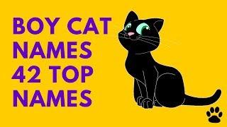 Boy Cat Names 42 Top Names Best List Names Youtube
