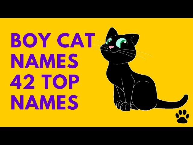 Cute Cat Male Names For Unique And Majestic Names