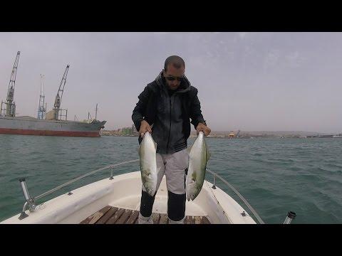 Pesce Serra – Pesca in mare a traina con il vivo