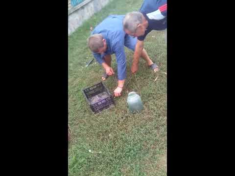 Папа нашол гнездо змей в погребе!!!