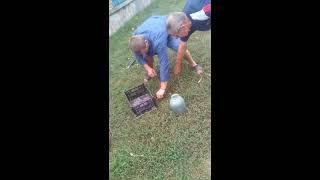 Папа нашол гнездо змей в погребе