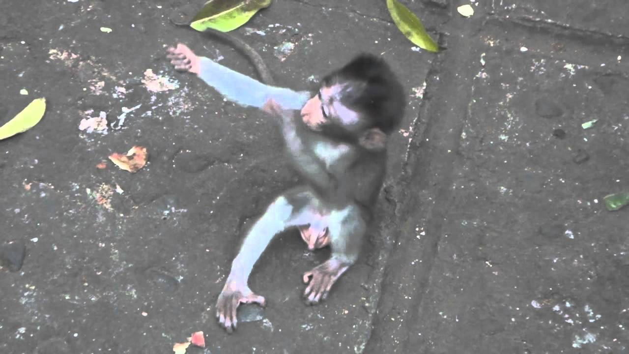 love in infant monkeys analysis In fact there is a lot of love linking you with it and it to you  my husband brought the baby monkey to me to take care of, and i did  which i compiled during .