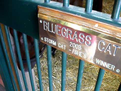 Winstar Farms- Versailles, Ky.  Horse Farms- Stallion