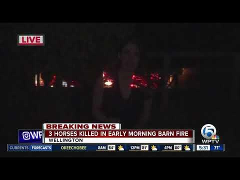 Report: 3 horses killed in Wellington barn fire