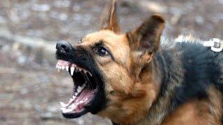 Собака  разодрала ребёнка...Ужас !!!